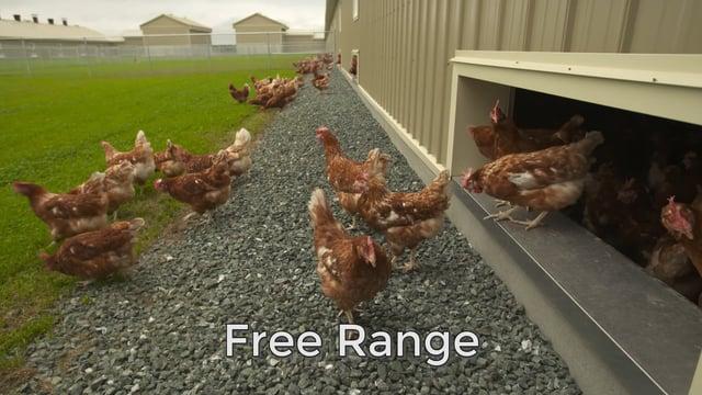 8. Free Range